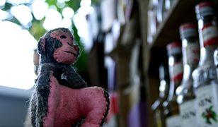 Małpi Biznes sprawdza się!