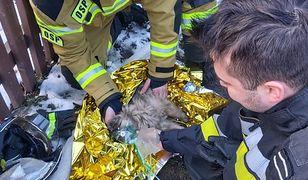 Podhale. Strażacy reanimowali psa