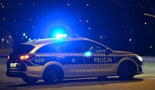 Tragedia na drodze w Brzeźnicy Leśnej. Motocykl zderzył się z łosiem. 10-latka w ciężkim stanie