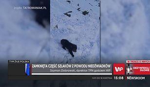 """Niedźwiadek na szlaku w Tatrach. Dyrektor TPN: """"Niech natura zdecyduje, co robić"""""""