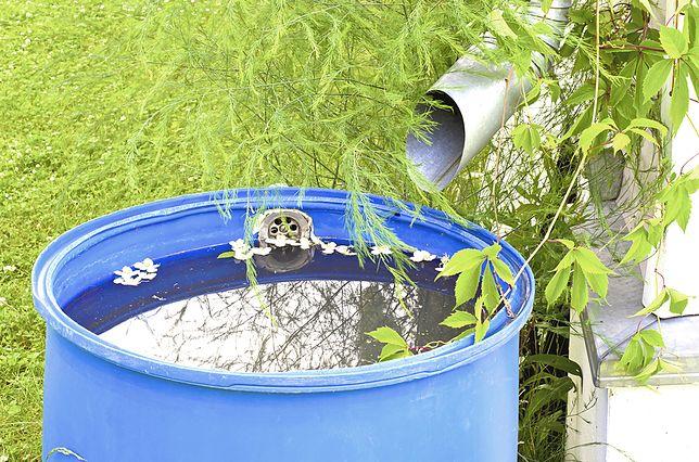 Deszczówka – jak ją gromadzić i wykorzystać