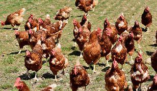 Rościn. Na fermie wykryto ptasią grypę
