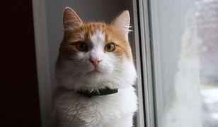 Kot okazał się lepszym przyjacielem człowieka niż pies
