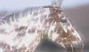 0005F569_original_6AE8FBABDFEE3313.jpg