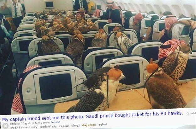 """""""Kto bogatemu zabroni?"""" - Saudyjski książę przewiózł swoje sokoły wykupując im... 80 biletów w samolocie pasażerskim"""