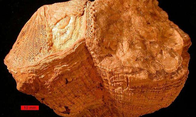 Prehistoryczne mięczaki zdradzają swoje sekrety