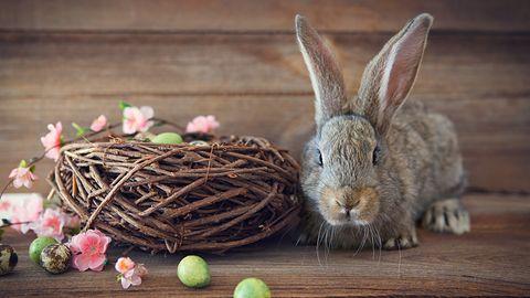 Aplikacje na Wielkanoc: z nimi ugotujesz, wyślesz życzenia i świąteczne kartki