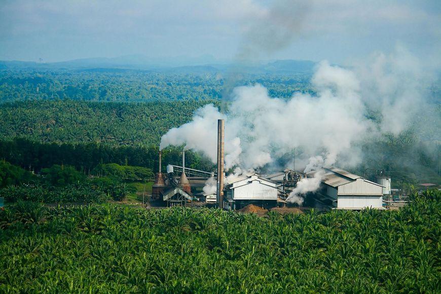 Dlaczego olej palmowy jest szkodliwy