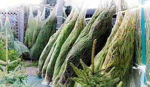 Cena choinki od lat stabilna. Polacy wydadzą na świąteczne drzewko kilkaset złotych