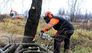 Koniec lex Szyszko. Ostatni weekend masowej wycinki drzew