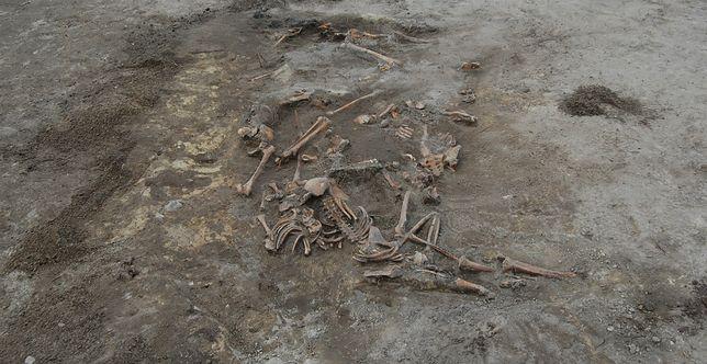 Masowa mogiła ofiar UPA odkryta w Woli Ostrowieckiej