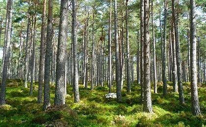Będzie kolejna awantura o Lasy Państwowe? Senatorowie PO chcą poprzeć PiS