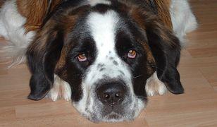 Bił psa kijem bejsbolowym. Mieszkaniec Łodzi zatrzymany