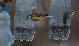 Dokarmianie ptaków