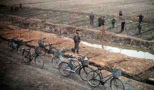 Koreańczycy z Północy przy pracy polowej