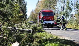 Halny w Tatrach. Strażacy usuwają drzewo tarasujące drogę na trasie z Zakopanego w kierunku Morskiego Oka