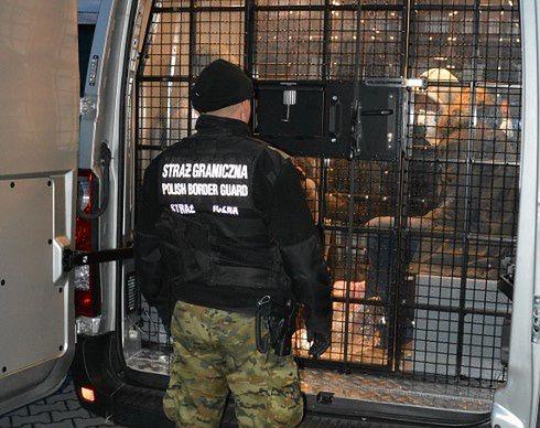 Cudzoziemcom przedstawiono zarzut przekroczenia granicy przy użyciu podstępu.
