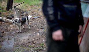 Psy zagryzły niepełnosprawnego. Nowe fakty