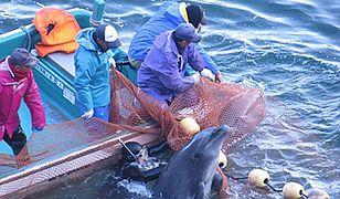 Rzeź delfinów