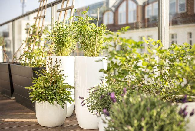 Jakie kwiaty na balkon - znajdź najlepszy sposób na aranżację.