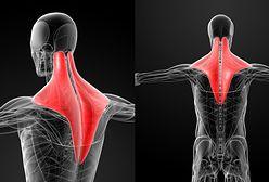 Mięsień czworoboczny - budowa i ćwiczenia. Jak leczyć ból mięśnia?