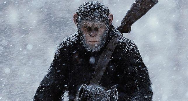 """""""Wojna o planetę małp"""": specjaliści od efektów przeszli samych siebie. Filmowe małpy jak żywe [TYLKO U NAS]"""