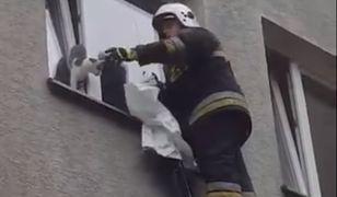 Przerażone zwierzę nie mogło się wydostać z wąskiej pułapki na 2. piętrze.