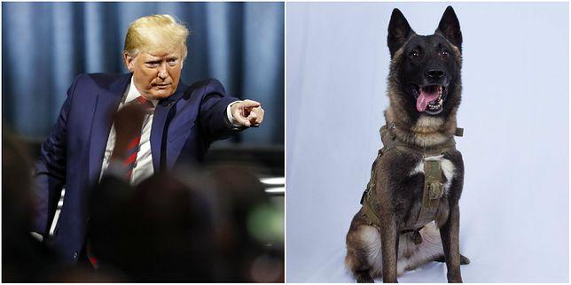 Abu Bakr al-Bagdadi z ISIS nie żyje. Donald Trump publikuje zdjęcie psa, który wziął udział w trudnej akcji