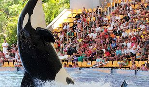 Spotkanie z orką to jedna z największych atrakcji Loro Parku