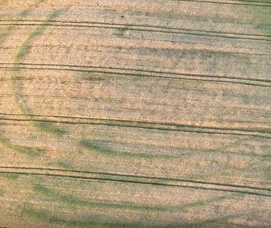Zdjęcie ilustracyjne. Przedstawia rondele w okolicy Cedyni