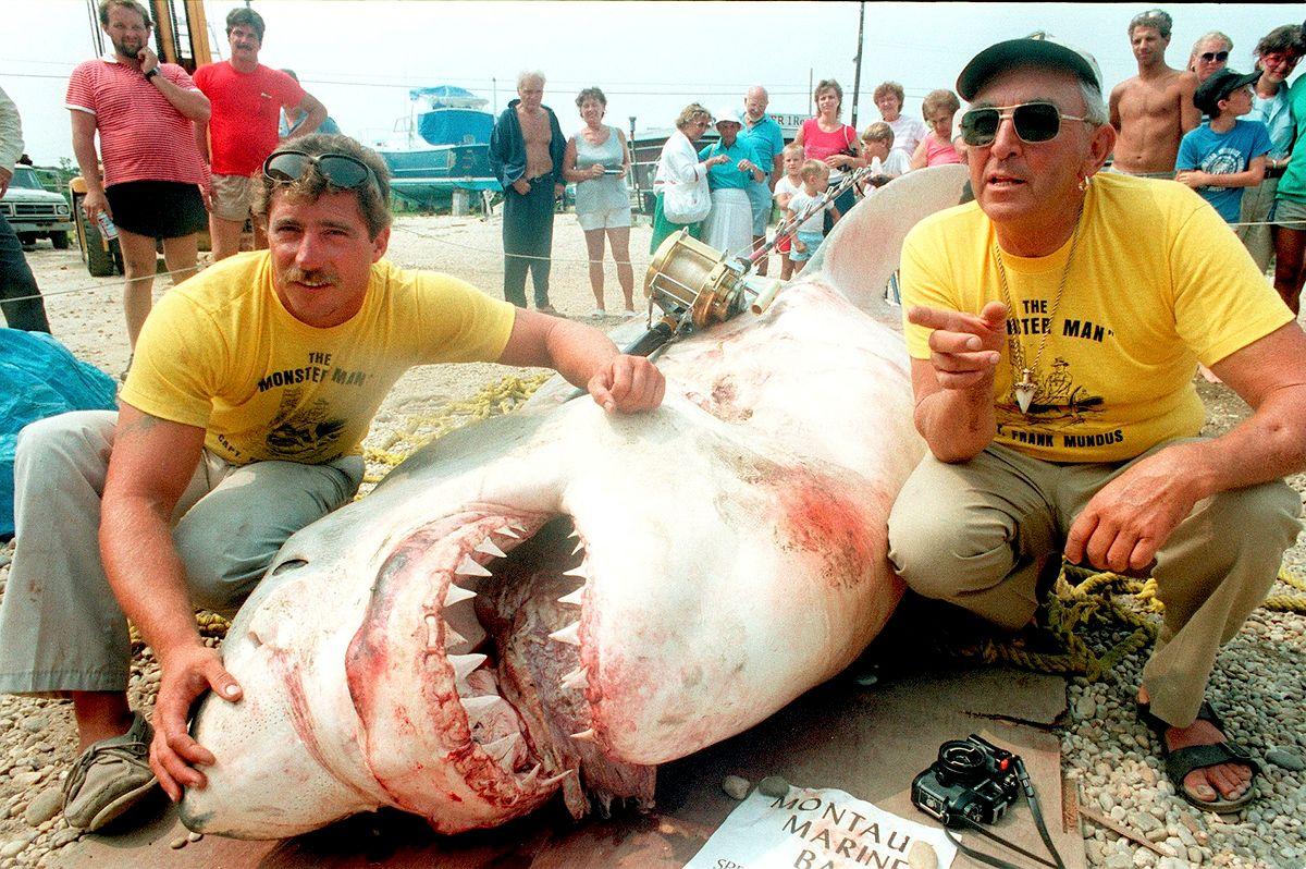 Filmy o rekinach zasiały trwogę. Nie wszystko jest wyssane z palca