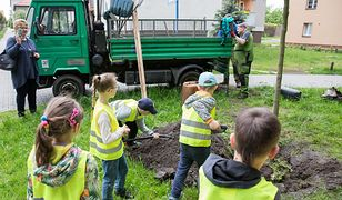 Katowice. Łatwy sposób na zielone otoczenie