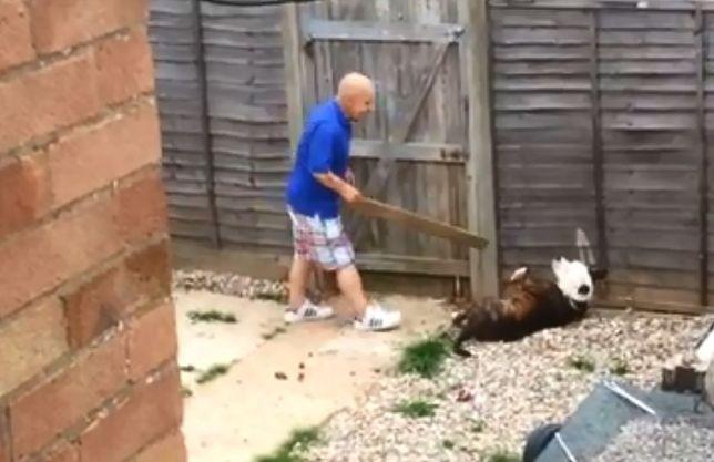 Opiekun dopadł psa na tyłach domu. Zaczął bić go drewnianą deską