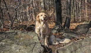 Tatry. Psy i koty porzucane na górskich szlakach