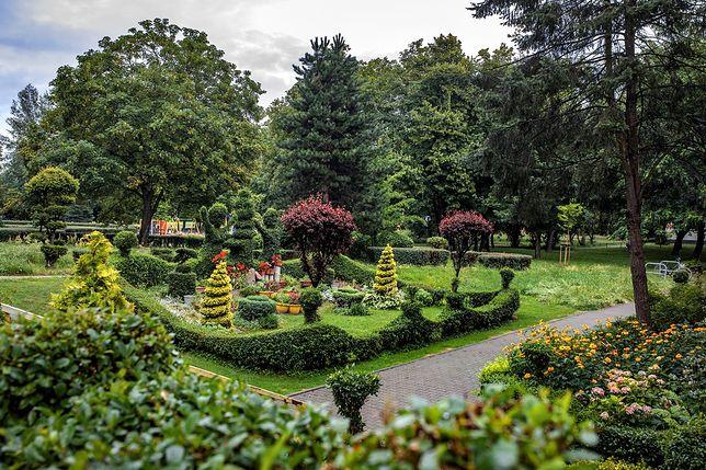 Wrocław. Ogród na Radosnej. Jak mieszkańcy sami zrobili sobie bajkowy świat pod blokiem