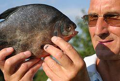 Egzotyczne gatunki przejmują polskie wody. Naukowcy biją na alarm