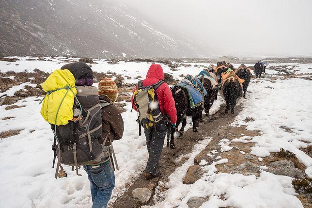 Żadna wyprawa w Himalajach nie obejdzie się bez Sherpów