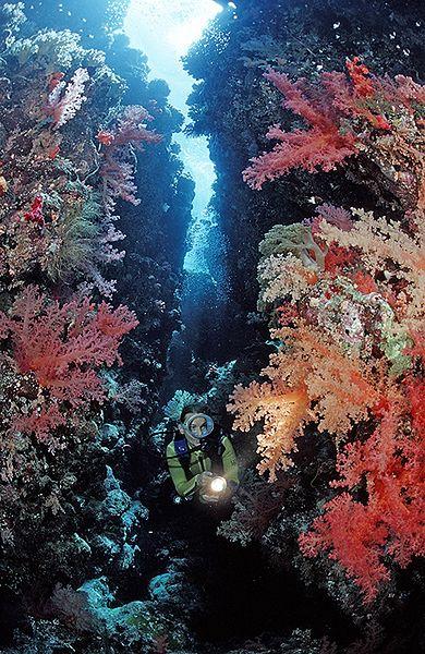 Co kryją w sobie morskie głębiny? - zobacz zdjęcia