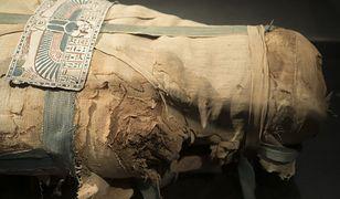 Archeolodzy zbadali dwie zaginione wśród zbiorów mumie. Nie należały do ludzi