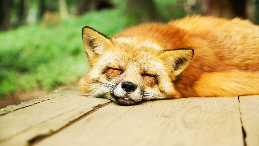 Firefox z DNS-over-HTTPS tylko w USA (fot. Pixabay)