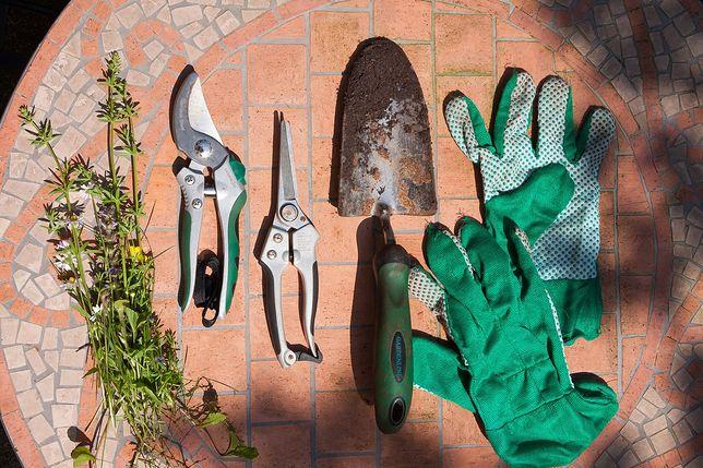 Marcowe prace w sadzie i ogrodzie. Przegląd najważniejszych sprzętów i narzędzi