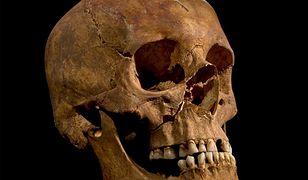 Badania szkieletu króla Ryszarda III potwierdzają prawdziwość relacji o jego śmierci