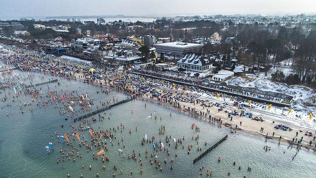 Tysiące morsów przybyły do Mielna. Jedna z największych tego typu imprez na świecie