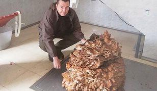 Największy grzyb na świecie. Znaleziono go w Hiszpanii