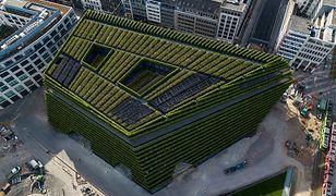 Biurowiec jak ogród. Takich budynków powinno powstawać więcej