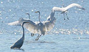 Na Zalewie Wiślanym rybacy wstrzymują połowy