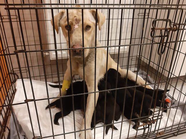 Łódź. Porzucone szczeniaki i pobita matka. Sprawca poszukiwany