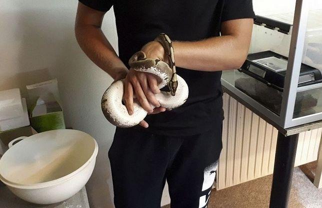 Trwają poszukiwania właściciela węża