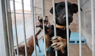 Tysiące zwierzaków czeka na nowy dom. Schronisko ma jednak określone zasady.