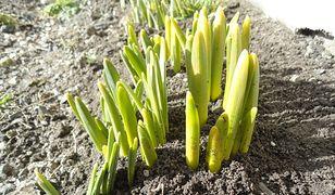 Marzec w ogrodzie - jakie prace wykonać